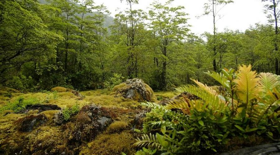 Queulat Nationalpark © Turismo Chile